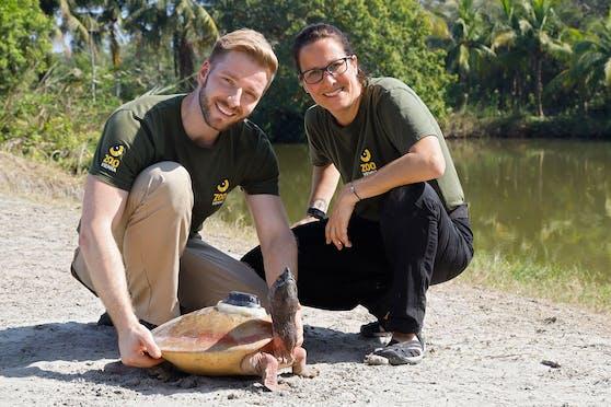 """Die """"Batagur""""-Schildkröte wurde dank Tierpark Schönbrunn vom Aussterben bewahrt. (Am Bild: Rupert Kainradl und Doris Preininger)"""
