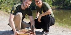 Schönbrunn rettet fast ausgerottete Schildkröte