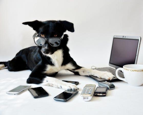 Die Katze auf der Tastatur und Hunde, die bei jeder Bewegung mit der Leine vor der Haustür stehen? Das wollen wir sehen. Sendet uns eure lustigsten Tierbilder aus dem Homeoffice.