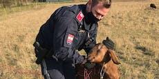 Polizei befreite in Bruck Ziege aus Weidezaun
