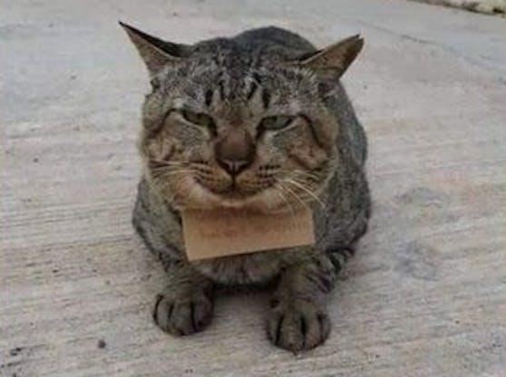 """Eine vermisste Katze kehrte mit einer """"Rechnung"""" zurück."""