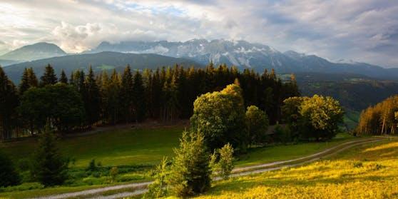 Ein Waldstück in der Steiermark (Symbolbild)