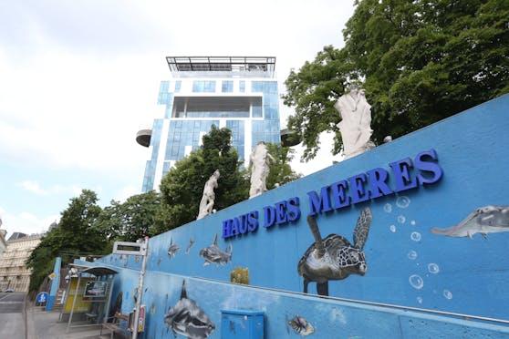 Das Haus des Meeres muss mit 3. November wieder schließen.