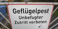 Geflügelpest-Ausbruch in Österreich bestätigt