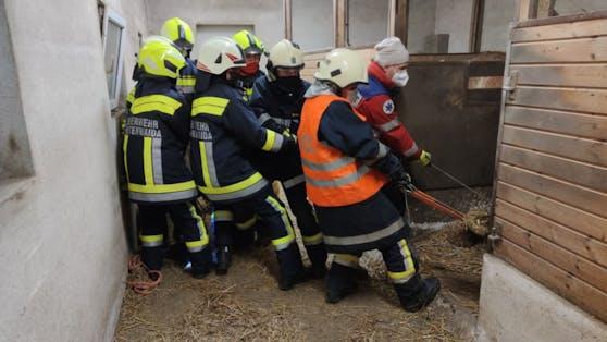 Die Feuerwehr Breitenwaida musste zu einem nicht alltäglichen Einsatz ausrücken.