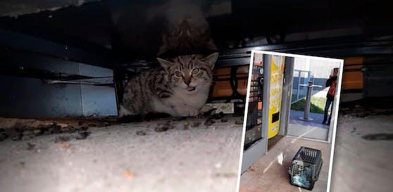 Dieses Katzerl saß auf der Raststation in einem Kaffeeautomaten fest. Die Tierrettung OÖ kam und befreite es.