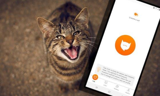 """Ein ehemaliger Amazon-Ingeneur übersetzt dir mittels APP nun das """"Miau"""" deiner Katze."""