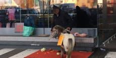 Circus Safari wehrt sich gegen Tierquälerei-Vorwurf