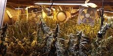 Riesige Marihuana-Plantage in Wiener Wohnung entdeckt