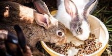 Tierquälerei in NÖ? Jetzt prüft Tierschutz-Landesrat