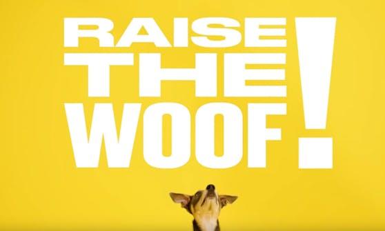 """""""Raise the Woof"""" ist vollgepackt mit englischen Zurufen und Pfeif- und Quietschgeräuschen."""