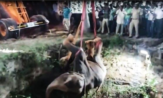 16 Stunden dauerte die Rettungsaktion in Indien um den Elefanten aus dem Brunnenschacht zu befreien.