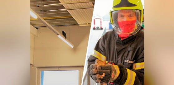 An der Decke des Lagerraums flog der Falke nervös hin und her. Die Feuerwehr Haid fing ihn schließlich ein.