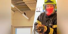 Fotos zeigen Feuerwehr auf Falkenjagd im Supermarkt