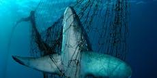 Fischerei tötet Millionen Delfine, Haie und Seevögel