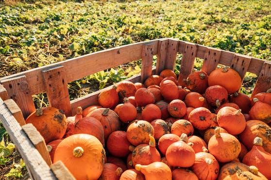 Das Gemüse kommt direkt vom Feld österreichischer Bauern, das Brot von Öfferl und das Schweinefleischvom Labonca Biohof.