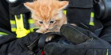 Katze rettet schlafenden Besitzer vor Feuer-Tod