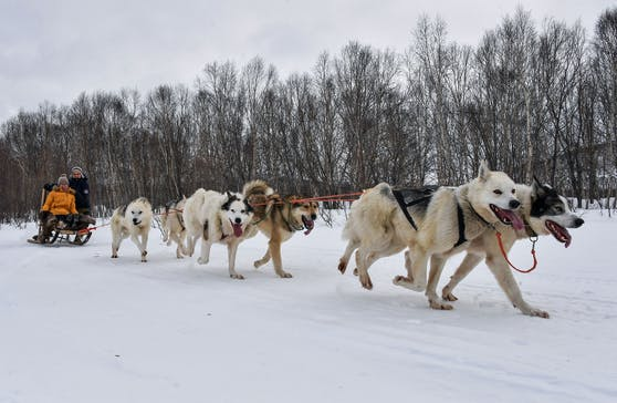 Die Besitzer der Schlittenhunde sind auf den ausgefallenen Wintertourismus angewiesen. Die Tiere sind zu teuer.