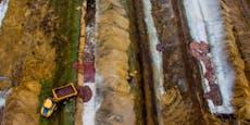 Verwesende Nerze könnten Grundwasser verseucht haben