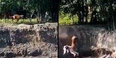 Video: Bengalischer Tiger macht Jagd auf Menschen