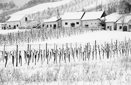 Verschneite Kellergasse mit Weinberg in Enzersfeld im Weinviertel. Archivbild