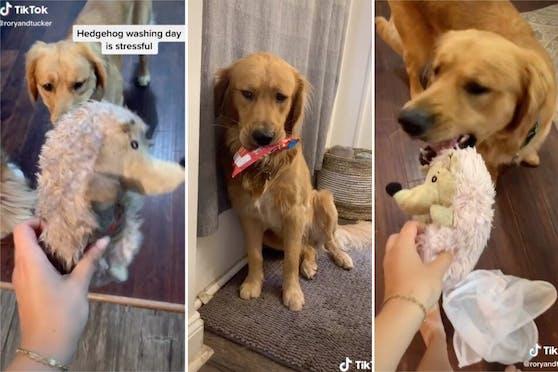 Ohne sein Lieblingsspielzeug ist Tucker furchtbar traurig, da hilft auch kein Ersatz, den er zwischendurch in sein Maul nimmt.