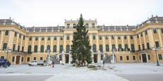 Christbaum als Symbol für Frieden vor Schönbrunn