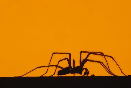 Spinnen Fernhalten