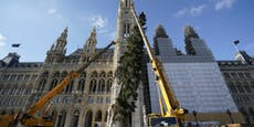 """Wiener Weihnachtsbaum als """"Zeichen des Zusammenhalts"""""""