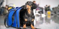 60.000-Euro-Flug, um trotz Corona Haustiere zu sehen