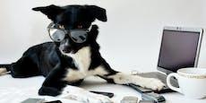 Hundetipps die helfen: Das Markerwort