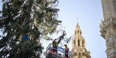 Hier wird kahler Wiener Christbaum aufgehübscht