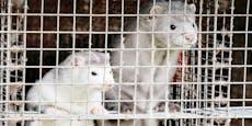 Russland entwickelt Corona-Impfstoff für Tiere