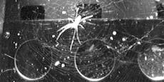 Spinnenbauen im Allihre Netze anders als auf der Erde
