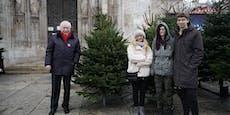 Michael Häupl verschenkt ersten Christbaum