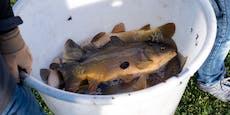 Prozess um Fisch-Verbrechen am Landesgericht