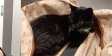 Katze in Reisetasche aus Schließfach gerettet