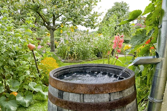 Eine Regentonne im Garten hilft dabei, den Wasserbedarf für die eigene Grünoase auf eine etwas nachhaltigere Art und Weise zu befriedigen.