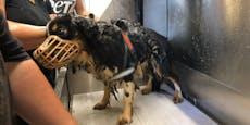 Frau ließ 14 Hunde in Kot und Urin verwahrlosen