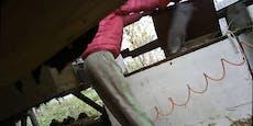 Schockierende Bilder: Undercover-Aufnahmen aus Pelzfarm
