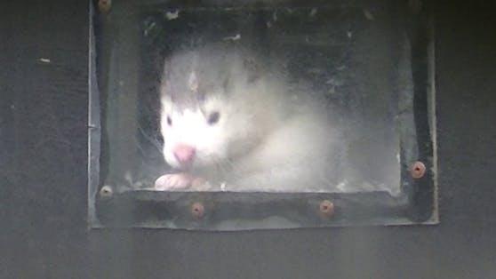 Die Nerze müssen für ihren Pelz jämmerlich leben UND sterben.