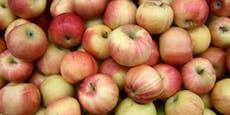 Steuerbetrug mit Äpfeln - 5 Jahre Haft für Obstbauer