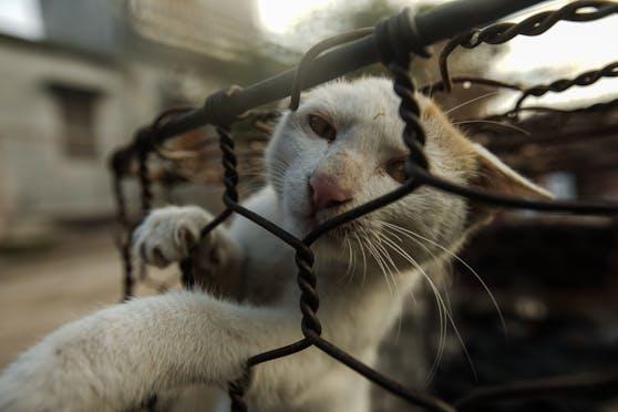 Am 15. Dezember wurde erstmalig ein Katzen-Schlachthaus in Vietnam geschlossen.
