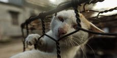 Katzen-Schlachthaus in Vietnam geschlossen