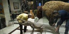 """""""Hitler-Alligator"""" jetzt ausgestopft in Museum"""