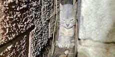 Wie ist denn das passiert? Katze steckte in Mauerspalt