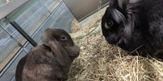 Besitzer schmiss Kaninchen einfach im Müllraum weg