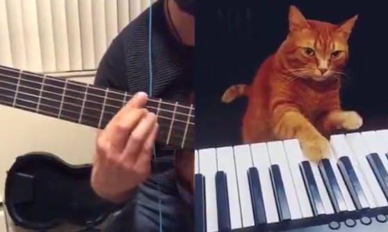 Kater Barney klopft in die Tasten, während Gitarrist Rob dazu spielt. Herrlich.