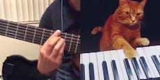 Gitarrist spielt mit klavierspielender Katze ein Duett