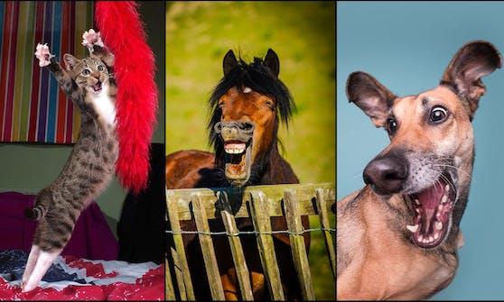 """Ob Katze, Kaninchen, Pferd oder Hund. Die Gewinner der """"Comedy Pet Photo Awards"""" stehen fest."""
